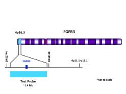 FGFR3 (4p16.3) Aqua FISH Probe