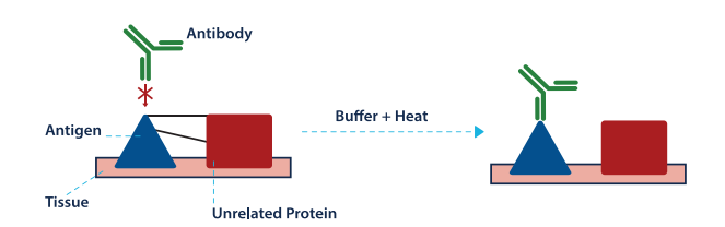 Biocare Buffer and Heat Visual