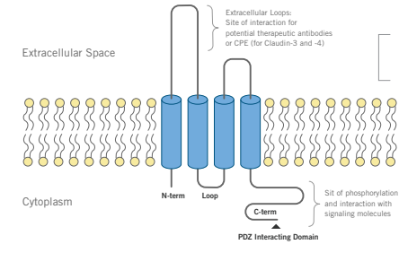 Biocare extracellular space