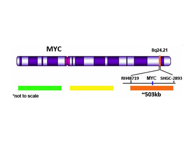 CYMO-MC-8-025