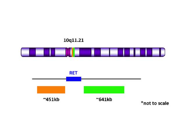 RET (10q11.21) Break Apart FISH Probe Orange/Green