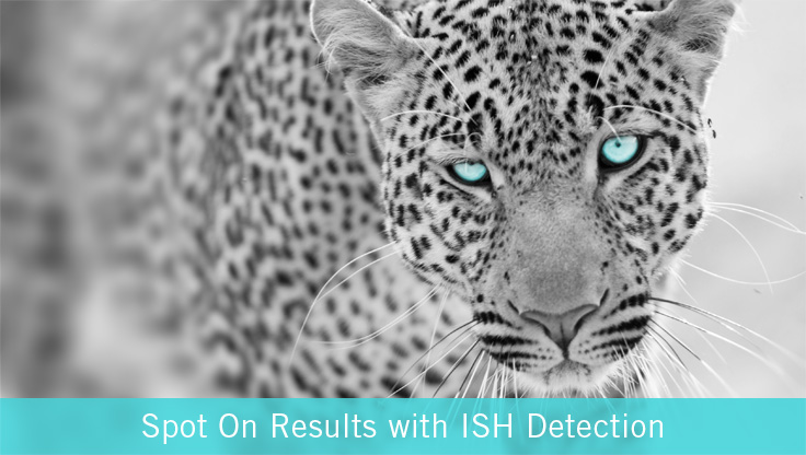 ISH-detection