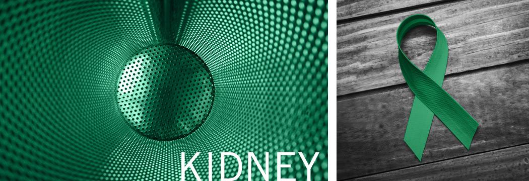 Kidney Antibodies