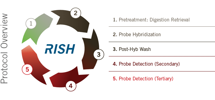 RISH Protocol Overview